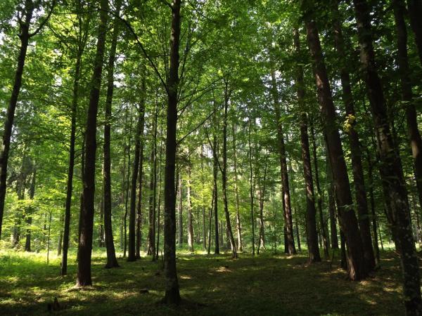 Describe a Forest Ecosystem | Synonym